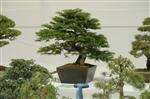 Descriptive bonsai image