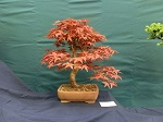 2014 Scottish Bonsai National Exhibition Show