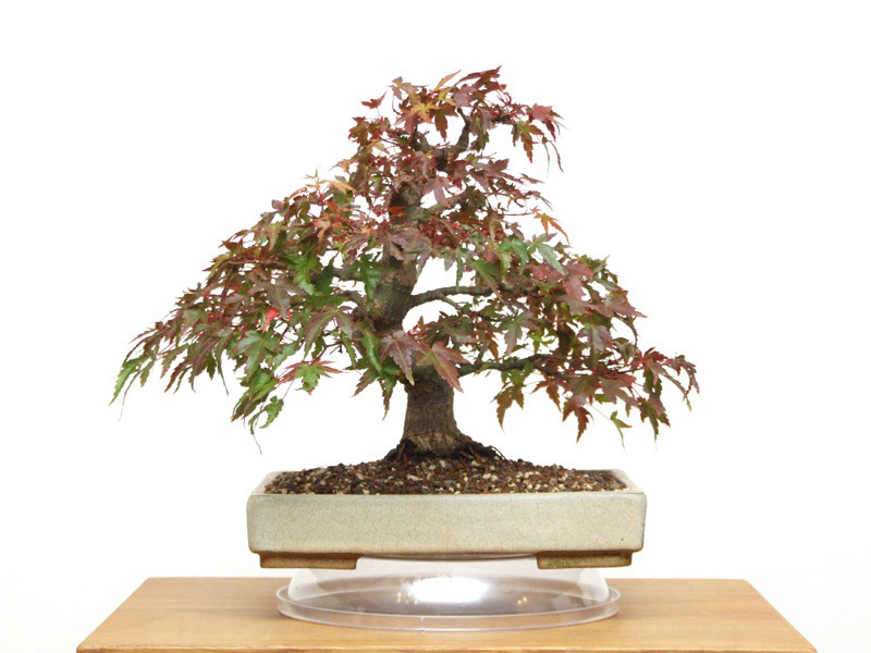 A To Z Of Bonsai Terms