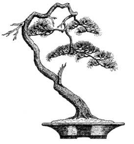 A to z of bonsai terms for Literati bonsai gallery