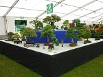 2016 Ayr Flower Show Bonsai Trees