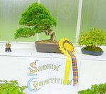 2012 Scottish Bonsai National Exhibition Show