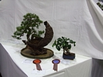 Ficus Bonsai Tree - GS2012 Bonsai Show