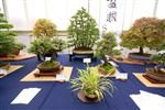 Scottish National Bonsai Exhibition Images
